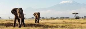 type-safari